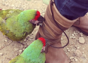 parrots on boots