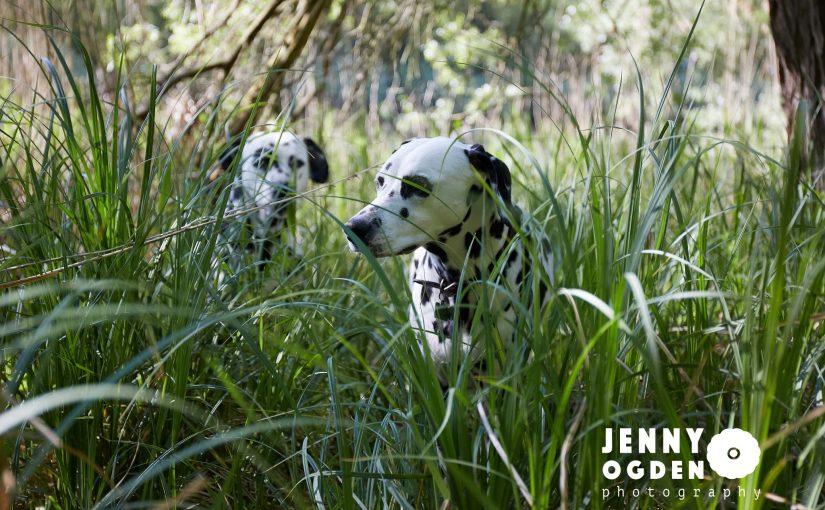 Dalmatian Woodland Photoshoot